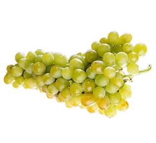 uva-rosetti